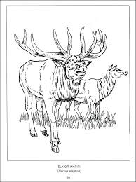 Coloring Pages Of Wild Animals Wildlife Coloring Pages Wildlife Of