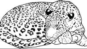 Clouded Leopard Coloring Page At Getdrawingscom Free For Personal