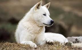 75 korea inspired dog names tae kwon