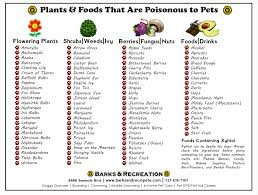 poisonous plants foods for pets