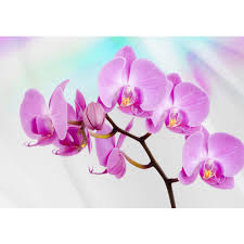 Paper Orchid Flower Mural No 299 Non Woven Or Paper Orchids Wallpaper Orchid Flower