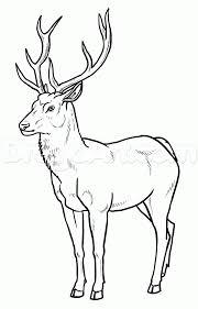 How To Draw Deer Step 22 In 2019 Deer Drawing Animal Line