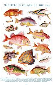 Colorful Fish Print 1950s Chart Of Assorted By