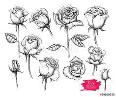 Small Picture Hand Drawn Rose Collection tattoos ideas Pinterest Hand