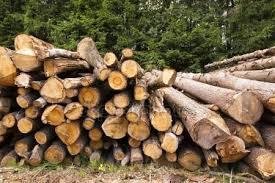 Afbeeldingsresultaat voor gevelde bomen rechtenvrije foto