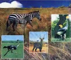 Охрана природных экосистем заповедники национальные природные  Рис 83 Заповедная степь Аскания Нова и ее обитатели