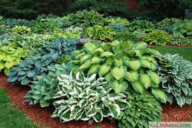 Small Picture 51 Hosta Garden Design Plans Free Hosta Garden Design Plans