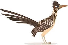 Bird Clipart Clipart - roadrunner-bird-animal-clipart - Classroom Clipart