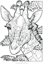 nightingale animal coloring pages