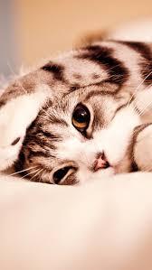 cat wallpaper iphone 5. Plain Cat Cute Cat 3Wallpapers IPhone 5 For Wallpaper Iphone B