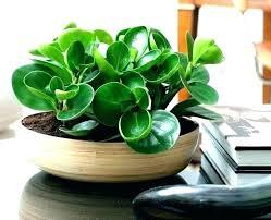 house plants indoor plant decor indoor