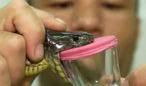 نتيجة بحث الصور عن سم الأفاعي