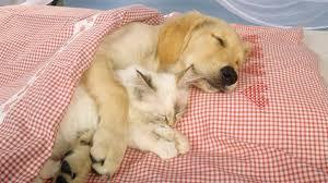Τι σημαίνει ο σκύλος στα όνειρά σας;