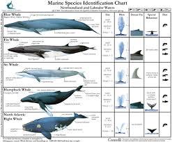 Whale Chart Species Marine Species Identification Chart 1 Seashepherd