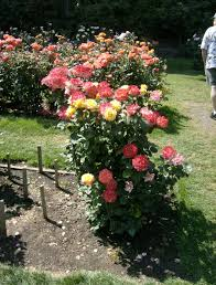 Small Picture Rose Garden Plans Beautiful Cottage Garden Planting Plan With