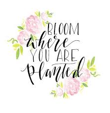 Flower Quotes Best Pin By Kayla Worley On Never Forget Pinterest Plants