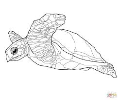 Realistic Turtle Coloring Pages Google Search