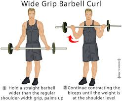Biceps Exercise Chart Standing Barbell Curl Forms Techniques Tips And Pictures