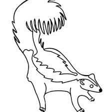 Small Picture Three Striped Skunk Coloring Page Color Luna