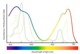 Action Spectrum Action Spectrum Bioninja
