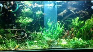 tropical aquarium wallpaper. Perfect Aquarium Tropical Fish Tank Aquarium For Wallpaper Engine  Links Intended Aquarium E