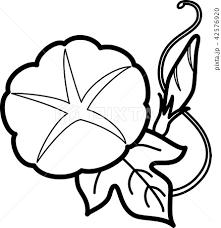 朝顔一輪 夏の花 ぬり絵のイラスト素材 42576920 Pixta