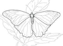 Butterfly Flower Colouring Pages Monarch Wings Coloring Page Cute