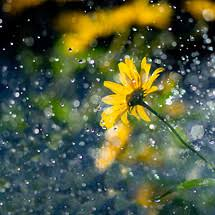 rain wallpaper hd for mobile. Exellent For 2 Flower In The Rain Inside Wallpaper Hd For Mobile