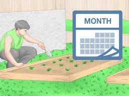 How To Use Crop Rotation In Gardening 11 Steps With Pictures