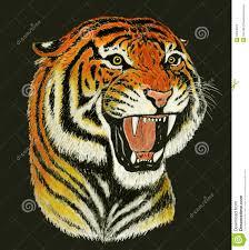 tiger face growling drawing. Modren Drawing Tiger Roar Drawing In Face Growling Drawing A