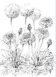 春 野に咲く可憐な花 たんぽぽ 大人の塗絵 塗り絵で癒し 風景画 花の絵