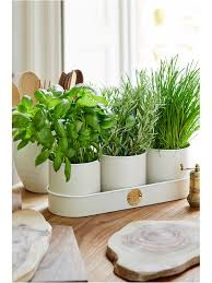 Buttermilk Herb Pots - Set of Three
