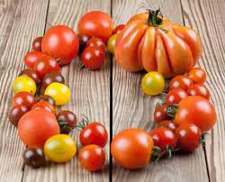 12 Steps To High Yield Tomatoes 50 80 Lbs Per Plant
