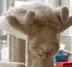 Image result for cats looking bored
