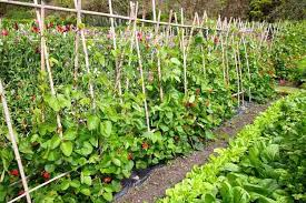 Small Picture 5 Simple Vegetable Garden Design Ideas Perfect For All Seasons