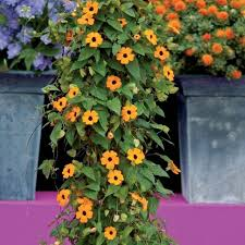 Flower Creeper Stock Images RoyaltyFree Images U0026 Vectors Wall Climbing Plants Names