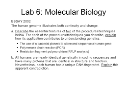 lab review lab molecular biology description transformation  lab 6 molecular biology essay 2002 the human genome illustrates both continuity and change