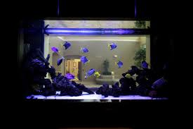 Q Spine Institute Paramus, NJ Orthopedic Surgeon Office Fish Aquarium