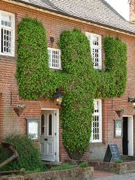 Social Climbers How To Cover A House In Plants  TelegraphWall Climbing Plants In Pots