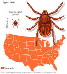 Cdc Tick Identification Chart Slide Show Guide To Different Tick Species And The Diseases