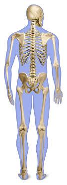 l rd back skeleton g final flat slii12
