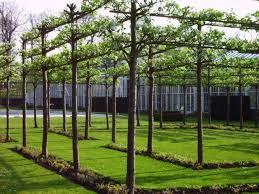 Espalier Fruit Trees  Google Search  Espalier Fruit Tree Growing Cordon Fruit Trees