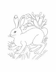 Small Picture Coyote Coloring Pages For Kids African Animals Pictures African