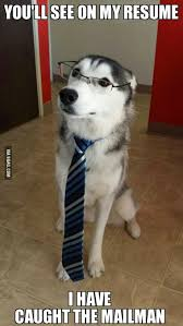 Best Of 9Gag : Funny Pictures: Educated Husky