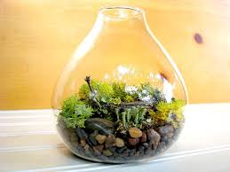 terrarium furniture. home design flowering terrarium plants interior designers furniture refinishing the incredible pertaining t