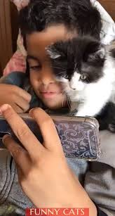 How Sweet Cat Cats Lovelycats <b>Sweet Funny</b> | Cats - Pinterest