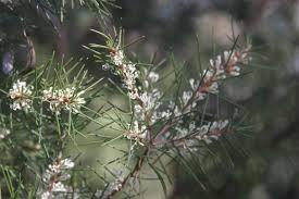 Choosing Native Plants Birds In Backyards