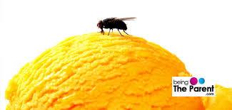 Housefly on icecream