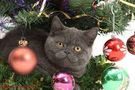 Grey Christmas Tree Grey Kitten Under A Christmas Tree Photo Wp18167