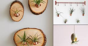 13 charming diy hanging air plant holders you can make quickly ly